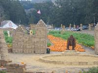 1007_pumpkin_kong_2